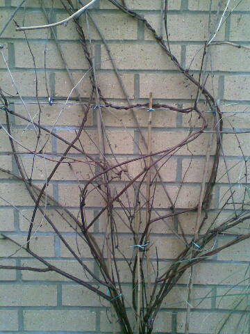 Walltwigs