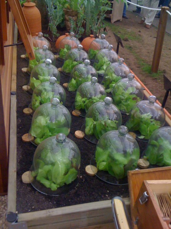 CLOCHES OR SCULPTURE