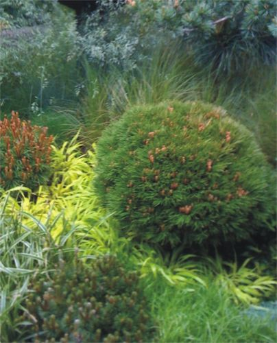 (1)1aaaaaconifersandgrass