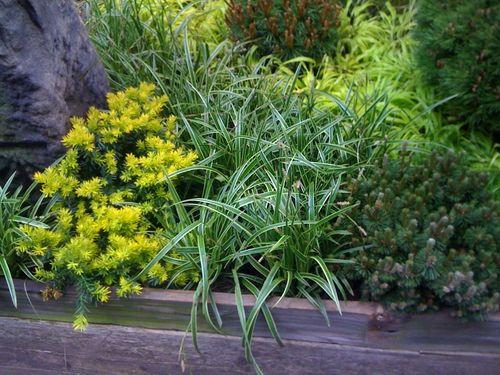 (1)1aaaaaconifersandgrass2