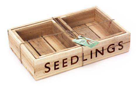 (1 seedtray