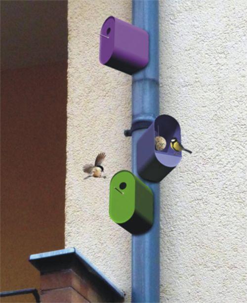 (1 birdmag