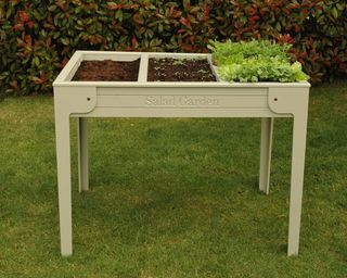 Salad leaf planter