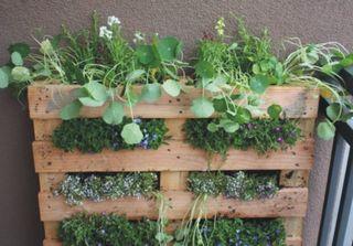 Pallet garden1