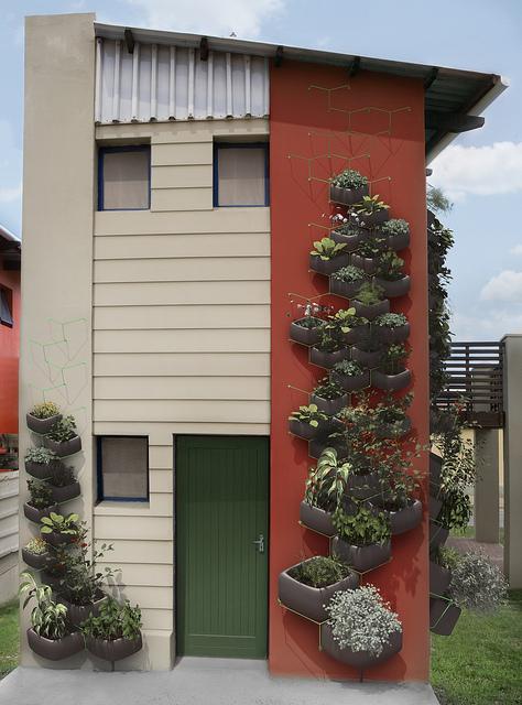 Wallflower urban garden