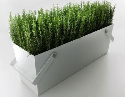 Falper plant