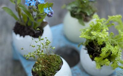 Tiny egg gardens