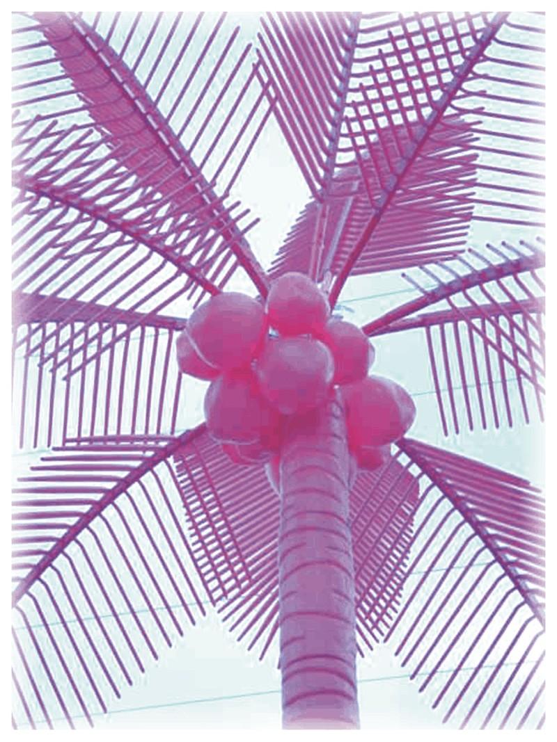 Pink_palm_tree_1