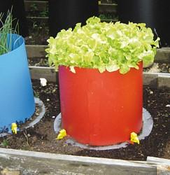 Kitchen_garden_planter_easy_grow